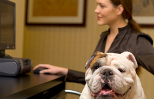 宠物能带入工作场所吗? 带宠物上班有哪些好处?