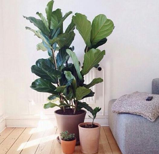 新房子应该买什么绿植?这几种旺宅绿植好看又好养!