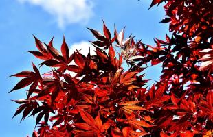 金秋季节赏红叶,来看看秋天里最美的红色!