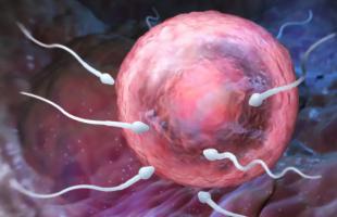 没对象也能生孩子?中国科学家接连突破生殖障碍,无需男女搭配